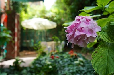 Hyacinths and roses dot the verdent garden that embraces Corina's Venice.