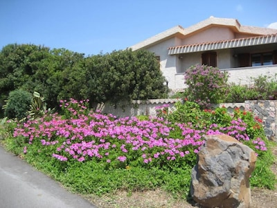 Flowers in front of the house