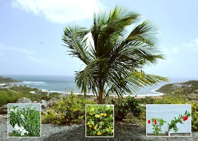 Onsite villa grounds. Panoramic view of Atlantic Ocean and Island of St.Barths.
