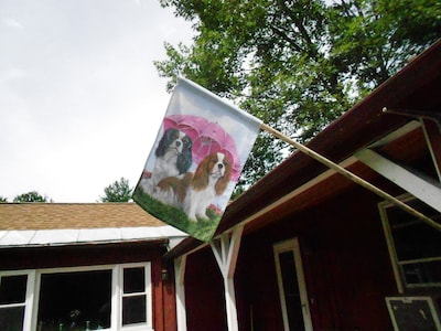 Welcome to Cavalier Cottage currently home to 5 rescued Cavaliers.