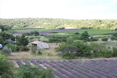 Vue de la terrasse sur les champs de lavande