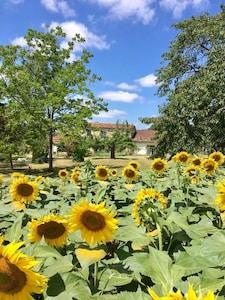 Main house, Gite and sunflower fields
