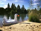 The beach and the swan! Enjoy!