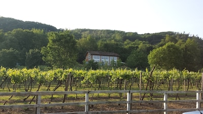 our house in the vineyard