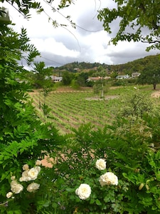Overlooking vineyard from back patio from Main House, May 2019.