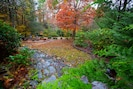 Our Fall forest showing off some of its beautiful colors in October and November