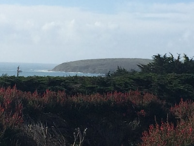 View of Bodega Head