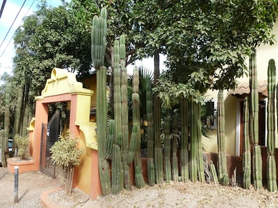 Entry with cactus bollards at parking