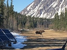 One of our Moose neighbors just checked our one of our solar setups