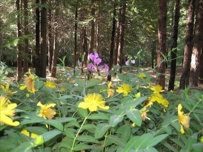 Fresh Pine Air in the Middle of 5 Tree-Filled Acres - All usable and walkable.