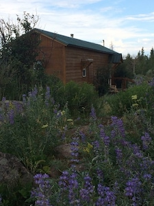 "The ""Nest"" amongst the lupines"