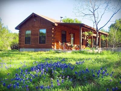 It's gorgeous around the cabin during bluebonnet season!