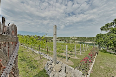 Vineyards - Take a walk and tour the vineyards that surround the property grounds.
