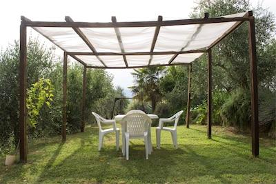 Pflanze, Möbel, Himmel, Schatten, Baum, Stuhl, Tabelle, Gartenmöbel, Tisch Im Freien, Gras