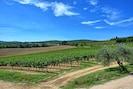 Landwirtschaft, Himmel, Feld, Weinberg, Grundstueck, Natürliche Landschaft, Ländliches Gebiet, Bauernhof, Ernte, Landschaft