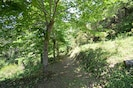 The path with the lime trees leading to the source. 20 Km of internal paths