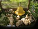 Tuin met huisdieren