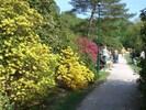 der Rhododendronpark von Graal-Müritz