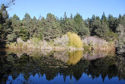 Tranquility Pond in Springtime