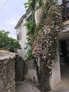 Come in May to enjoy the jasmine.