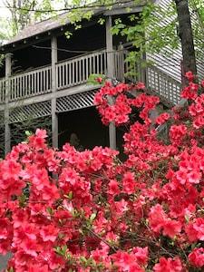Beautiful azaleas!