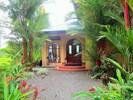 The Aracari is a small Toucan often seen near the House
