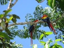 These toucans love their tree