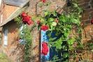 Rosen am Eingang