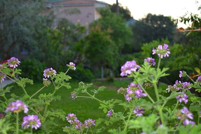 Centre d'informations de Salaora, Arta, Épire, Grèce