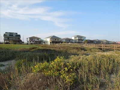 View from beach to beach houses: beautiful wild flowers and grass  are preserved