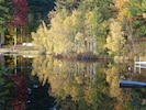 see mirrored birches from the dock