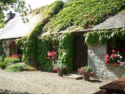 Cratloe Woods, Cratloe, County Clare, Ireland