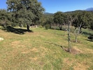 Vaste terrain clos de plus d'un hectare planté d'arbres fruitiers dont agrumes