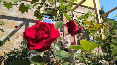 Rosen vorm Haus