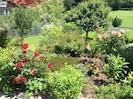 Blumenpracht in unserem Garten