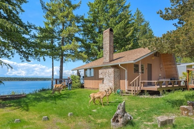 Your cabin awaits. Meet the Herron Island welcoming committee.