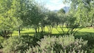 2 acre  retreat w spectacular views