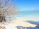 Mangroves frame the private beach. The areas most important feature.