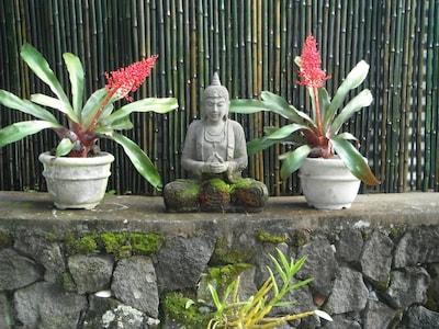 Peaceful garden retreat