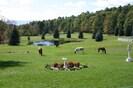 Pine Ridge Farm meadows & hiking trails through the woods