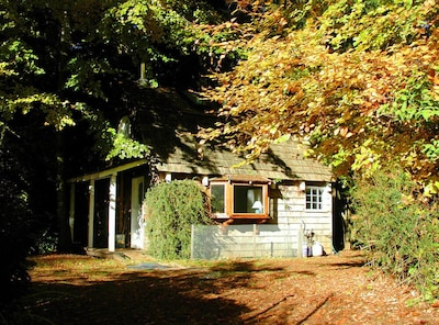 Autumn at Forest Raven