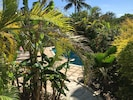Mature Tropical plants create a privacy barrier