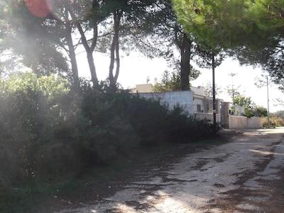 Villa Maria von duftenden Pinien und Macchia umgeben.