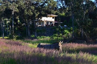 Tuffy in the pasture below the Gueshouse