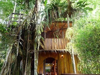 Jungle Tree House