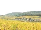 promenade dans les vignes autour d'Arbois en octobre