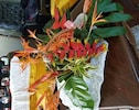 Exotic Tropical Flowers Bouguet - Helconia and Scarlet Ibis.