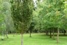 A private park