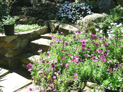 Detail of the back garden. Left at the rustic