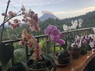 Orchids on the patio.